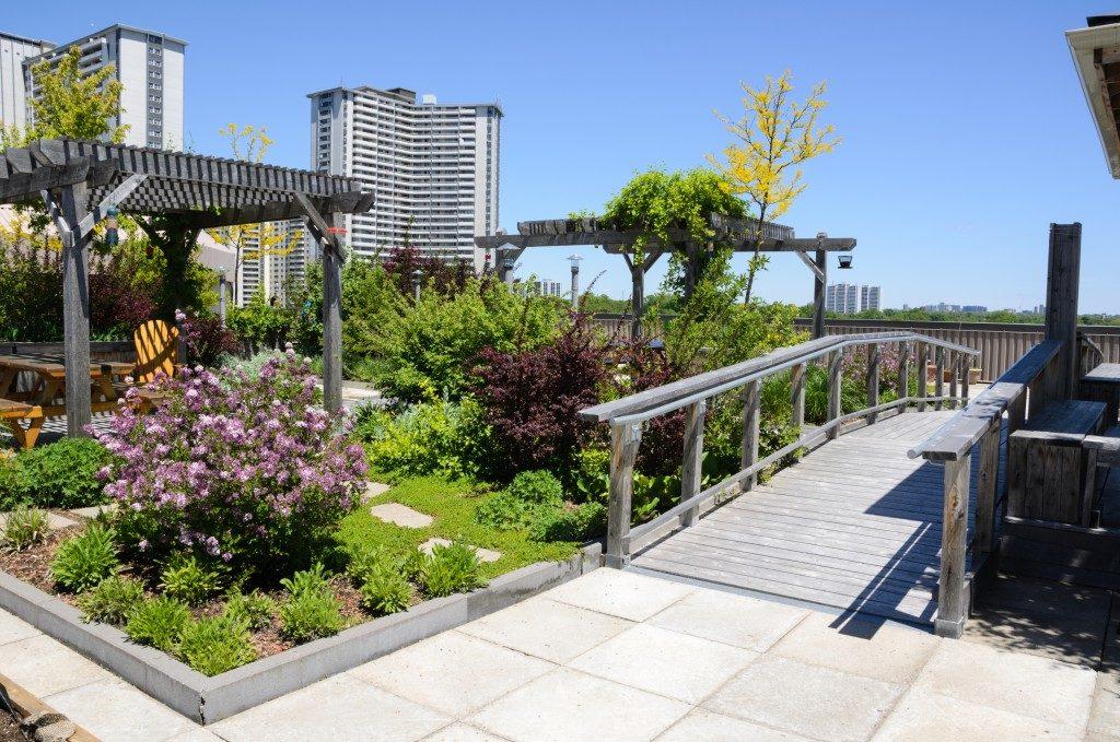 rooftop garden landscape